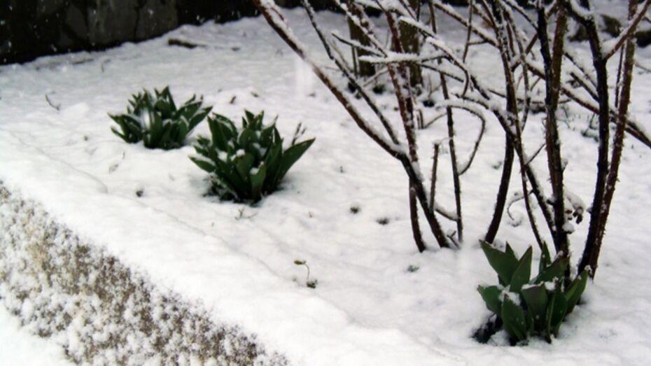 В Верхнемамонском районе выпал снег