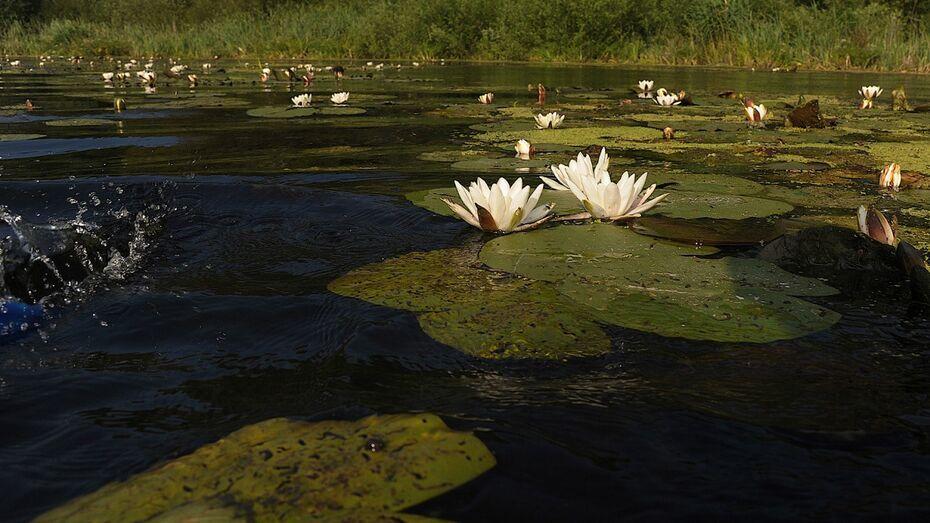 Воронежская область заняла 32 строчку в экологическом рейтинге субъектов РФ