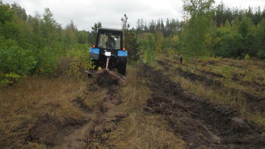 В лесничествах Воронежской области стартовала подготовка к весенним посадкам