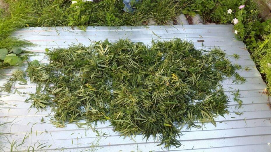 В Рамони суд назначил жителю Тульской области штраф 20 тыс рублей за хранение марихуаны