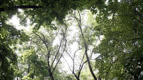 В Воронеже запланировали посадку 2 тыс деревьев и 10 тыс кустарников осенью 2017 года