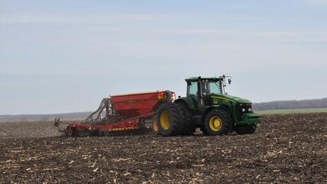 В Павловском районе пшеницей засеяли более 25 тыс га пашни