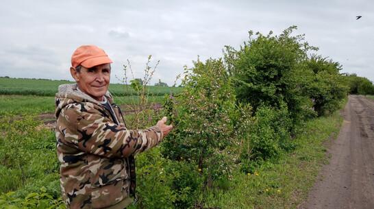 Воронежский сельчанин высадил более 200 деревьев в честь жертв Великой Отечественной
