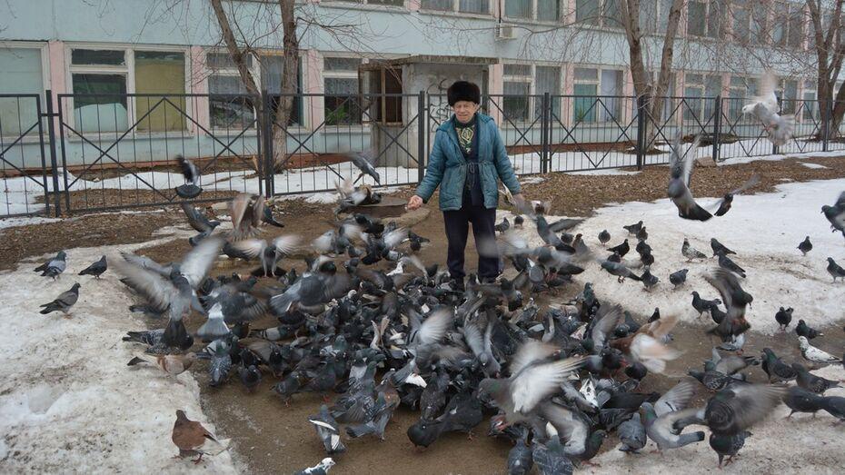 Россошанец Евгений Рубец приручил сотню диких голубей