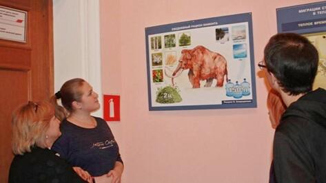 Хохольский музей представил выставку «Костенки. Время мамонтов» в Воронеже