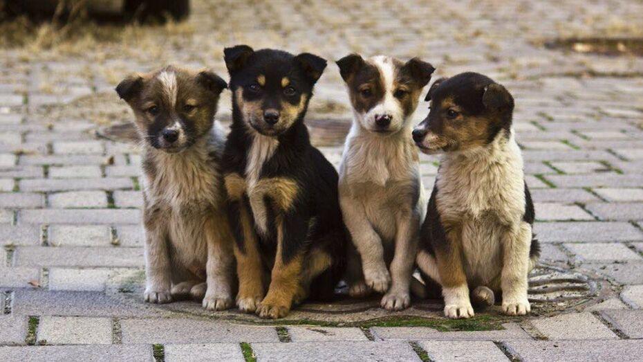 Акция в защиту животных пройдет в Воронеже 17 сентября