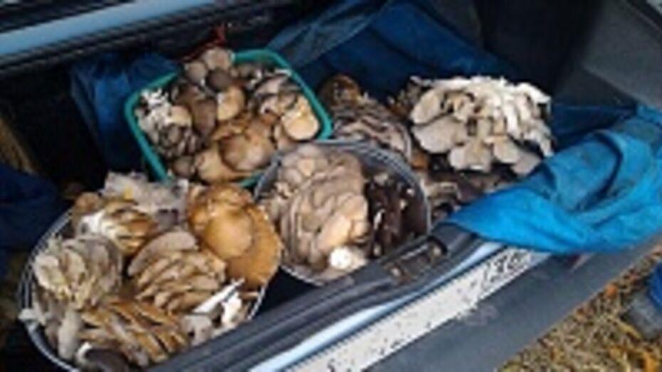 Жители кантемировского села за час насобирали пять ведер грибов