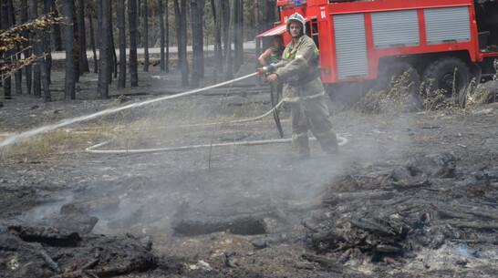 На восстановление сгоревшего в Воронежской области леса уйдет около 3 лет