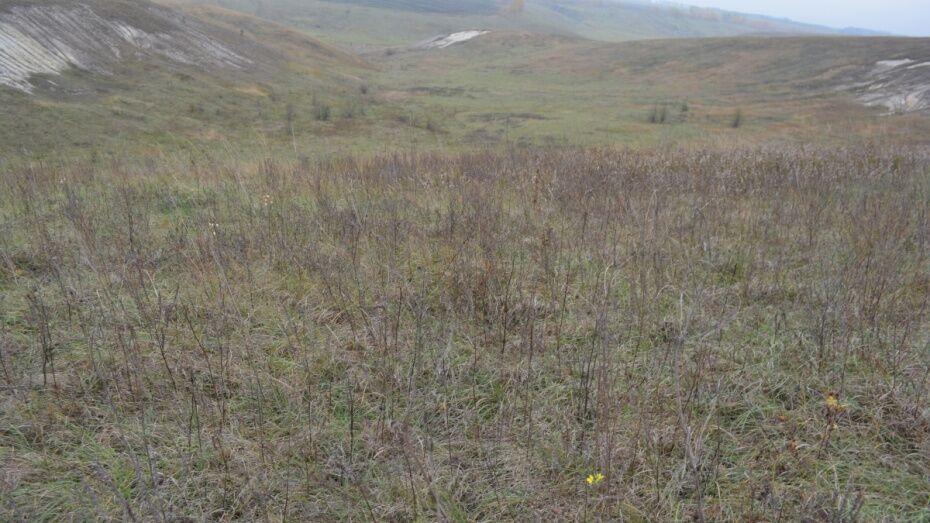 В Воронежской области создали государственный природный заказник