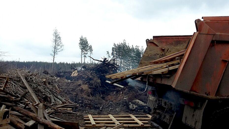 Экологи попросили главу Нововоронежа убрать свалку у «Леса Победы»