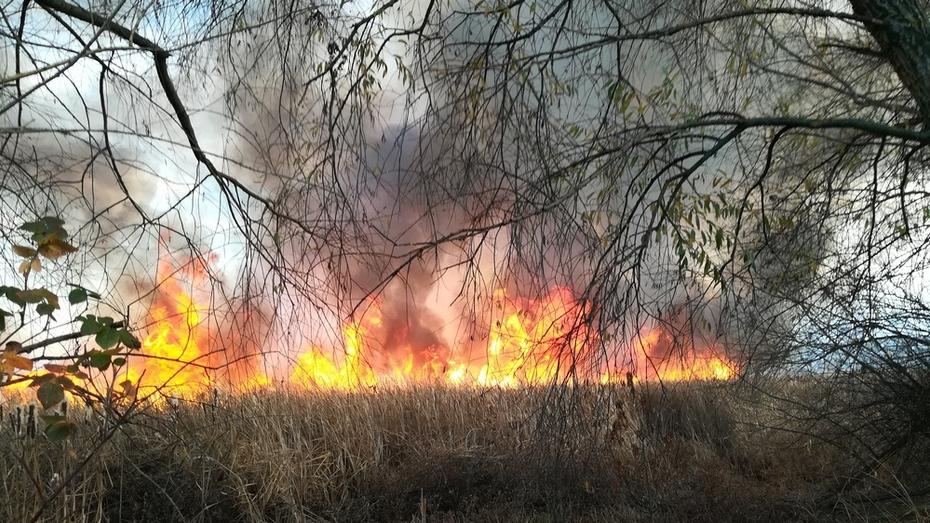 В Борисоглебске по вине 9-летнего ребенка выгорело 15 га луга