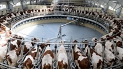 Молочный союз России назвал Воронежскую область примером для страны