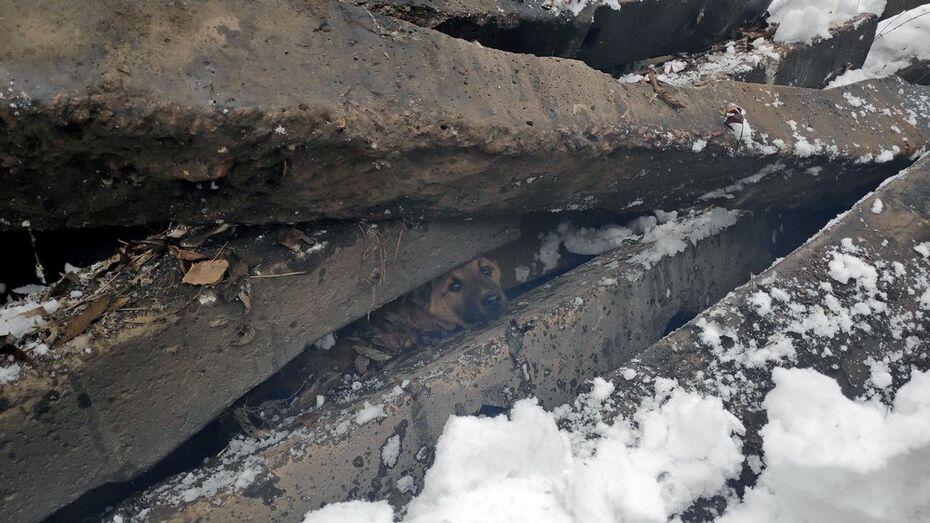 Жители хохольского поселка Опытной станции ВНИИК спасли бродячую собаку