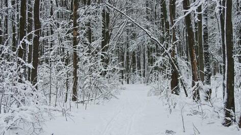 В Воронежской области браконьеры срубили деревья на 1,8 млн рублей