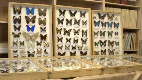 В воронежской библиотеке имени Короленко открылась выставка насекомых
