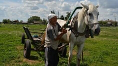 Житель  нижнедевицкого поселка косит траву на музейном экспонате
