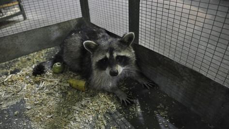 Воронежский зоопарк попросил о помощи для животных