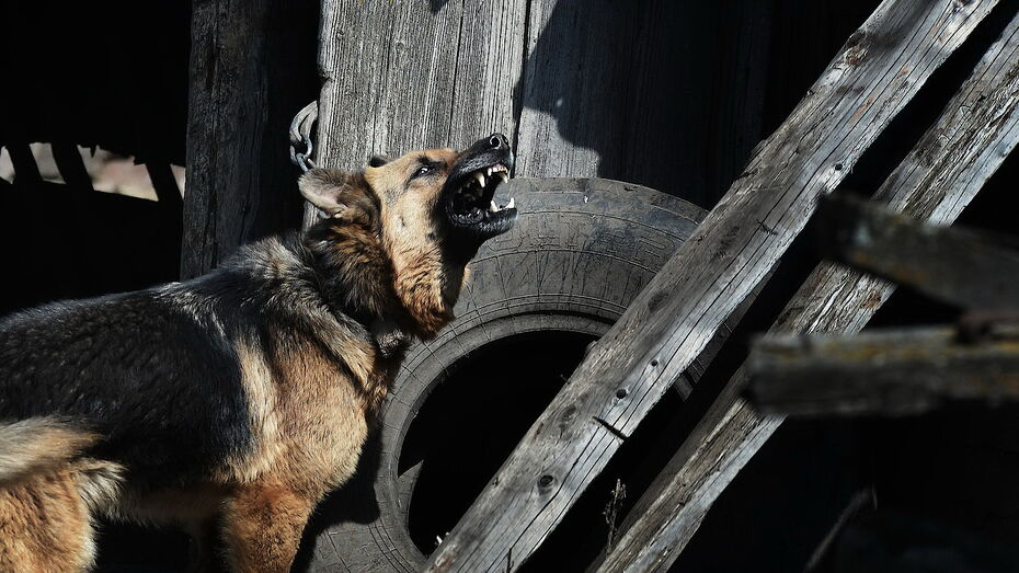 Воронежский райцентр объявили неблагополучным по бешенству до конца лета