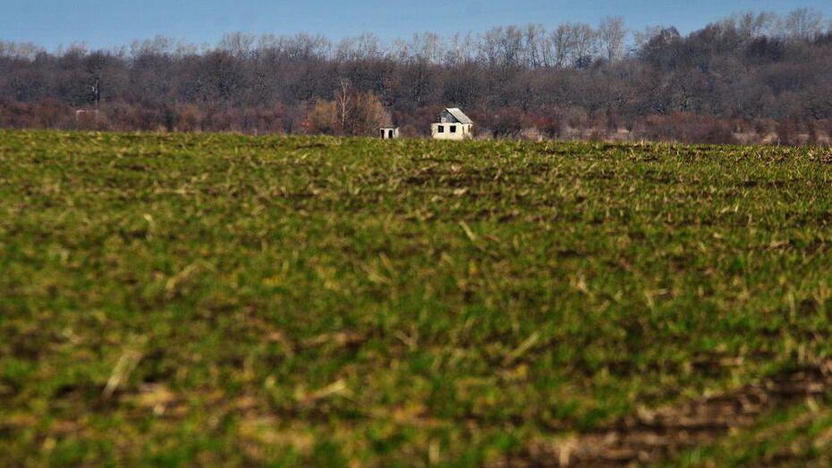 Воронежским аграриям помогут с льготными кредитами на приобретение кормов