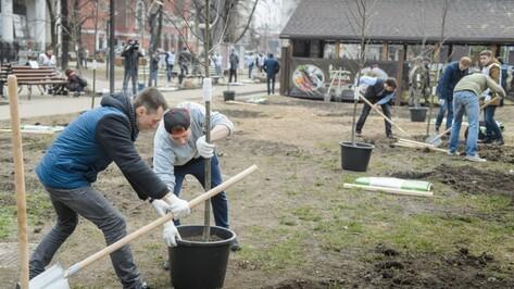 В Воронеже в сквере на проспекте Революции высадили 24 дерева