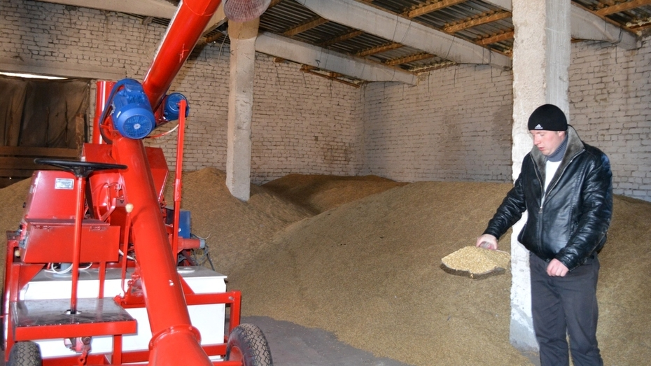 Нижнедевицкие аграрии запасли семена для пересева озимых