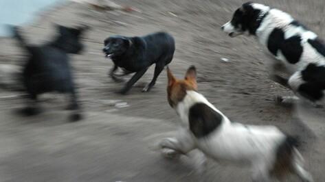 Зоозащитники: в Воронеже за 15 месяцев догхантеры истребили более 210 животных