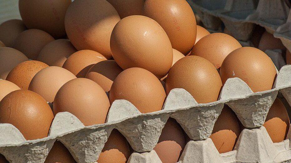 Воронежская область попала в тройку лидеров по производству яиц в ЦФО