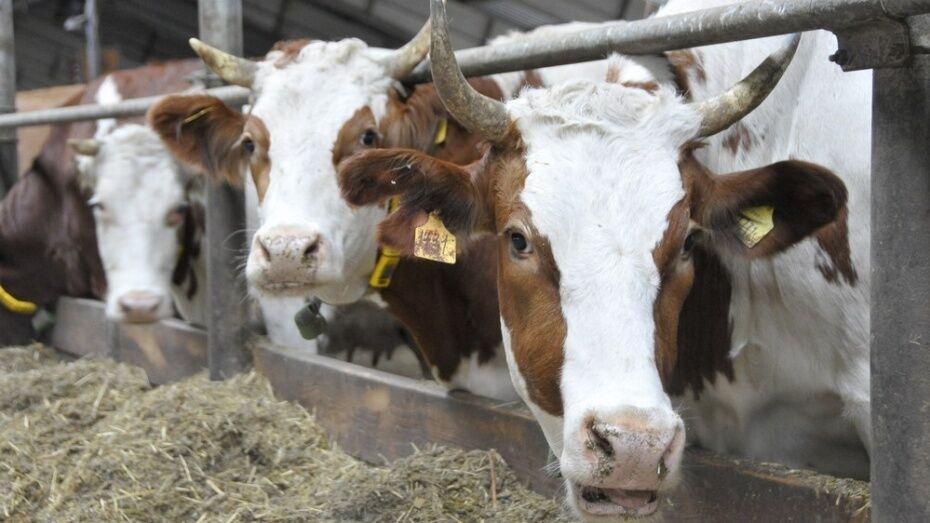В Воронежской области построят завод по переработке животного сырья и производству муки