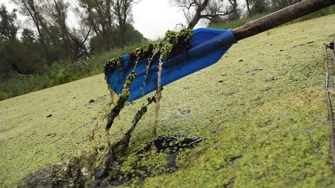 Расчистка еще 8 км воронежской реки Тавровка стартует в 2021 году