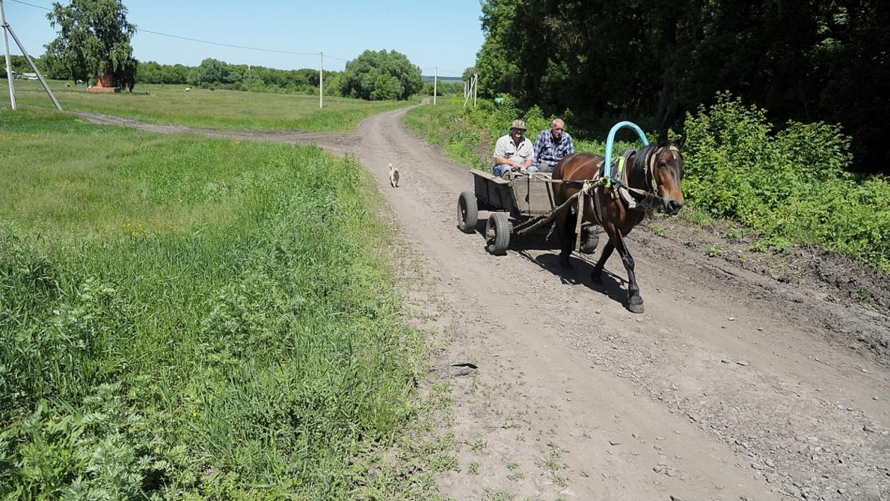 Заброшенные хутора: как пустеют воронежские деревни. Новая Грань