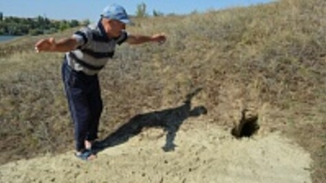 В Нижнедевицком районе зарегистрировано два случая бешенства лисиц
