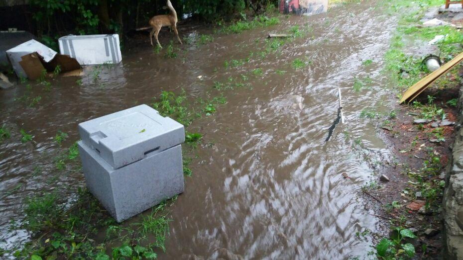 В Воронеже нашли улетевшего из вольера во время грозы филина