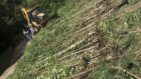 Силовики возбудили дело о незаконной вырубке леса в воронежском микрорайоне Репное