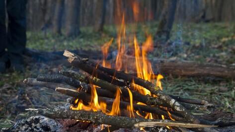Три воронежца заплатят штрафы за костры в лесу
