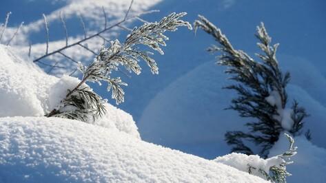 Снежный март поставил под угрозу озимые в Воронежской области