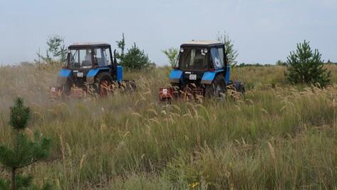 В Воронежской области прополют почти 7 тыс га леса