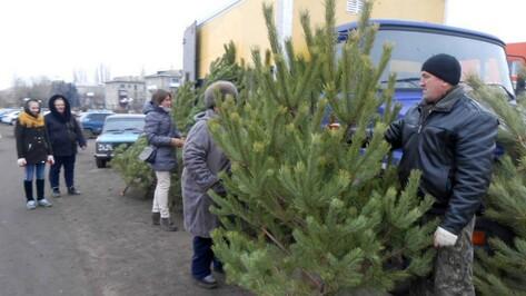 В Таловой открыли елочный базар