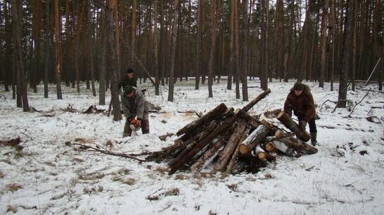 Леса под Воронежем расчистят от аварийных деревьев