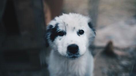 В галерее «Х.Л.А.М» покажут фотографии бездомных собак Воронежа
