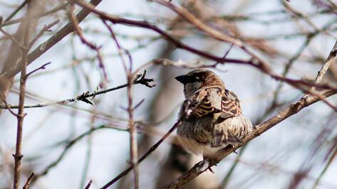 Воронежцев зовут кормить птиц в дендрарии Института генетики