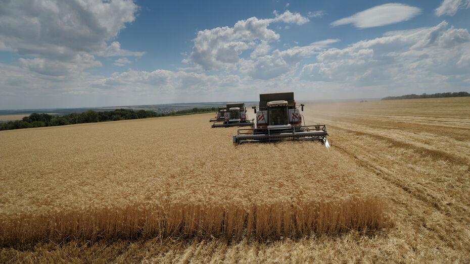 Воронежский «Продимекс» оценил грядущий урожай сахарной свеклы в регионе