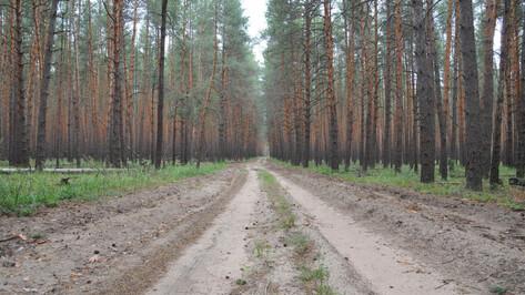 Власти оформили границы зеленого пояса Воронежа