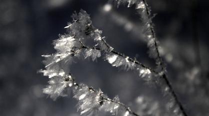 До 9 градусов мороза предсказали синоптики в Воронеже в первые дни зимы