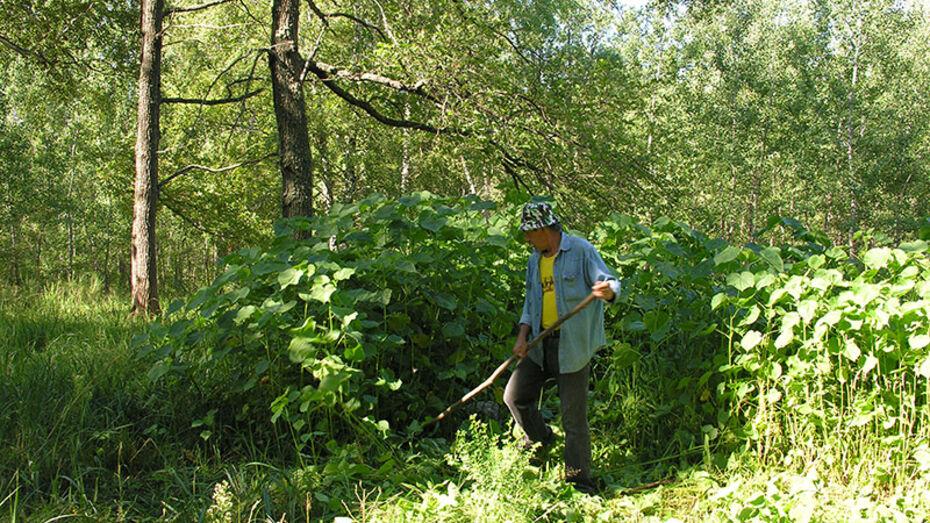В Воронежском заповеднике обнаружили шесть новых видов лишайников