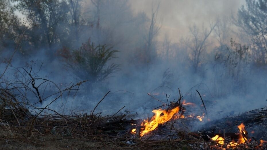 Особый противопожарный режим в Воронежской области начнется 20 апреля