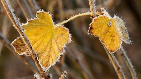 МЧС вновь объявило штормовое предупреждение в Воронежской области из-за заморозков