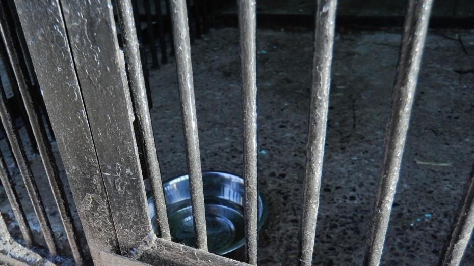 Директор Воронежского зоопарка: «Мы перевели тигрицу в прочную клетку»