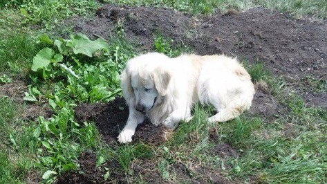 Под Воронежем собака спасла мужчину из горящего дома