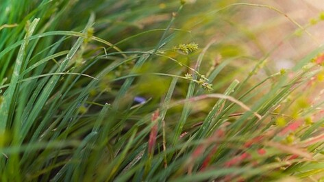 В Воронеже появятся еще 8 особо охраняемых природных территорий