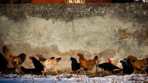 В Воронеже покажут работы фотографов, которые сочетают репортаж с методами искусства